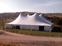 Where to find 100X100 TWIN POLE TENT in Louisville